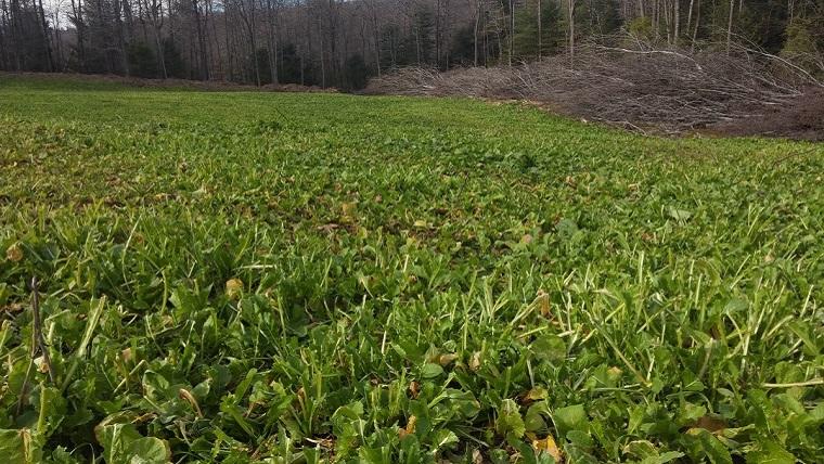 Cervicide Plot Planting
